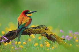Flower And Bird - bird on flower branch 7003576