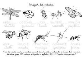 Coloriage à imprimer  Imagier des insectes