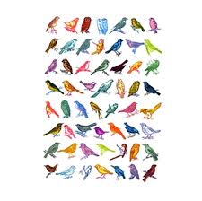 listbirds birds john dilnot screen prints sale products the red