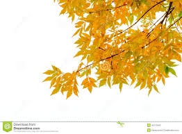 silhouette of tree branch and leaves stock photo image 62607796