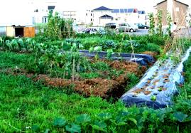 backyard vegetable garden plans christmas ideas best image