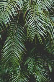 best 25 palm background ideas on pinterest palm tropical