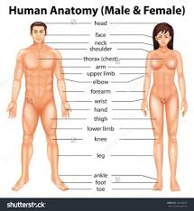 Human Anatomy Male Name Women Parts Of Body Pic Anatomy Body List