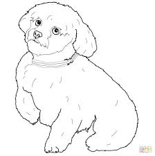 coloring pages dog color dog coloring pages chihuahua dog