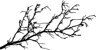 15 tree branch silhouettes png transparent onlygfx