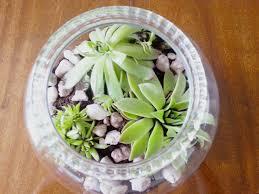 fish bowl terrarium make do and diy