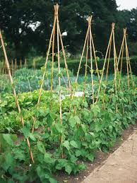 What Vegetables Need A Trellis Grow A Row Of Beans Vegetable Garden Hgtv And Beans