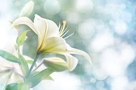 white flower white flowers flower meaning