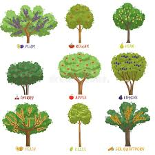 different fruit trees sorts with names set garden trees and berry