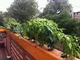 Balcony Planter Box by 21 Best Railing Planters Images On Pinterest Deck Railing