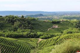 wine where to sip and savor the best organic wine in italy