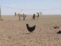 small chicken farm in tugrug dorieke u0027s blog