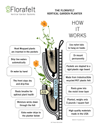 homelife 10 best plants for vertical gardens enjoy a vertical garden indoors with florafelt akron ohio moms