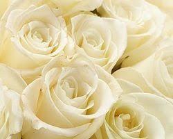 Bulk Flowers Online 31 Best Garden Images On Pinterest Climbing Roses Dublin And