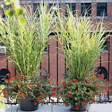17 top ornamental grasses bright yellow bold colors and perennials