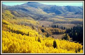 yellow aspen s place images and words