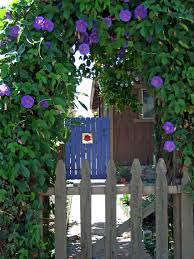 1915 cottage little and lewis blue for my garden gate