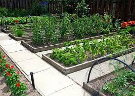 4x4 raised bed vegetable garden layout raised gardens designs