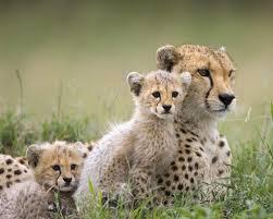 wild animals pictures qygjxz