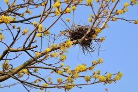 bird nest in tree stock image image of brown bird season 14167609