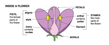 flower facts sacramento splash