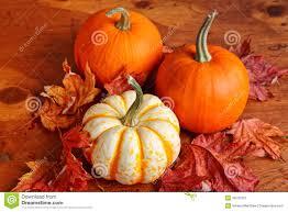 fall pumpkin decoration fall pumpkins and decorative squash royalty free stock photography