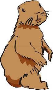 beaver beaver fur beaver pelt png image pictures picpng