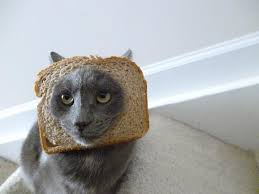 Cat In Bread Meme - cat breading know your meme