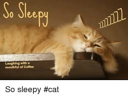 Sleepy Cat Meme - so sleep laughing with a mouthful of coffee so sleepy cat meme