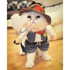 Kitten Costumes Halloween 768 Cat Costumes Images Cat Costumes Dog Cat