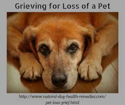 grieving loss of pet pet loss grief dealing with pet loss pet loss remembrance