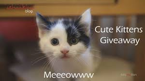 5 cute kittens to give away for free youtube