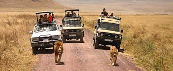 wildlife tours images Wildlife tours a chance to killing adventure expedition world travel jpg