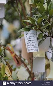 wishing paper wishing paper hanging on wishing tree at temple stock photo