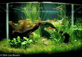 Aquascaping Techniques Pin By Stephanus Mardianto On Aquascape Pinterest