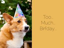 Corgi Birthday Meme - corgi birthday party pupcake recipe brownie bites blog