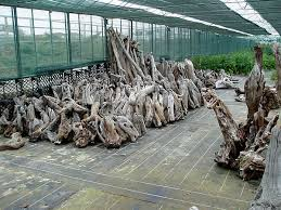 driftwood for sale stockists of architectural driftwood sculptures