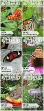 81 best butterfly u0026 hummingbird plants images on pinterest
