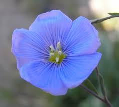 native plants of massachusetts garden of edith desert gardening for brown thumbs
