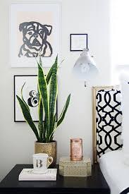 plante verte chambre à coucher quelle plante mettre dans chaque pièce de la maison