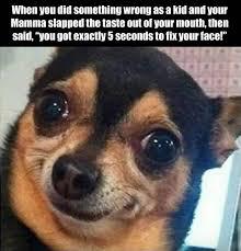 Funny Dog Face Meme - funny dog face