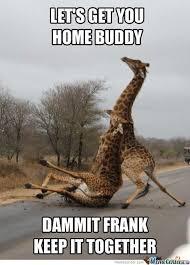 Giraffe Meme - 20 most funniest giraffe meme pictures and photos