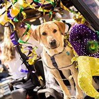 mardi gras dog today mardis gras dog parade at baytowne wharf 30a