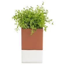 design blumentopf cultdesign cult design blumentopf selbstbewässernd evergreen groß