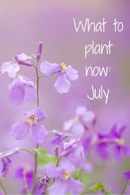 The Summer And Winter Garden - what to plant now july the winter summer and tyxgb76aj