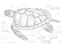 imagenes tortugas verdes dibujo de tortuga verde para colorear dibujos para colorear