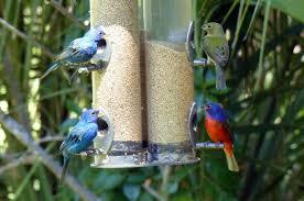 fun facts about the great backyard bird count birding basics
