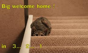 funny welcome big welcome home in 3 2 1 lolcats lol cat memes