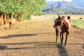 sis q ranch tent camping sis q ranch ca 13 hipcamper reviews