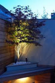 best 25 lighted trees ideas on wedding trees